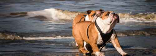 Go with your dog to the beach 2 with your dog to the beach,pet friendly spain