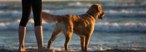 Go with your dog to the beach 3 with your dog to the beach,pet friendly spain